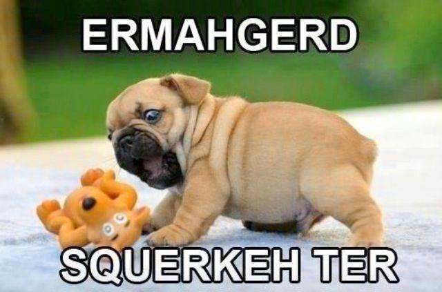 Top Pupies Chubby Adorable Dog - ac4b9ad2410b2ea1500b817d4cd6c100  HD_92914  .jpg