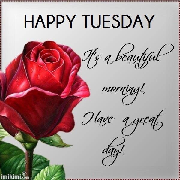 Explore Happy Tuesday Quotes, Happy Friday, And More! Greeting