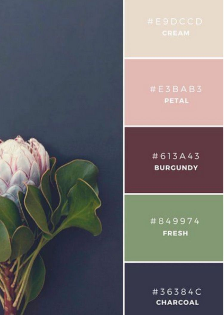Feminine Color Palette Burgundy Green Pink Cream And Navy