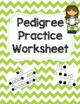 Pedigree Practice Worksheet Worksheets Vocabulary Teacher Pay