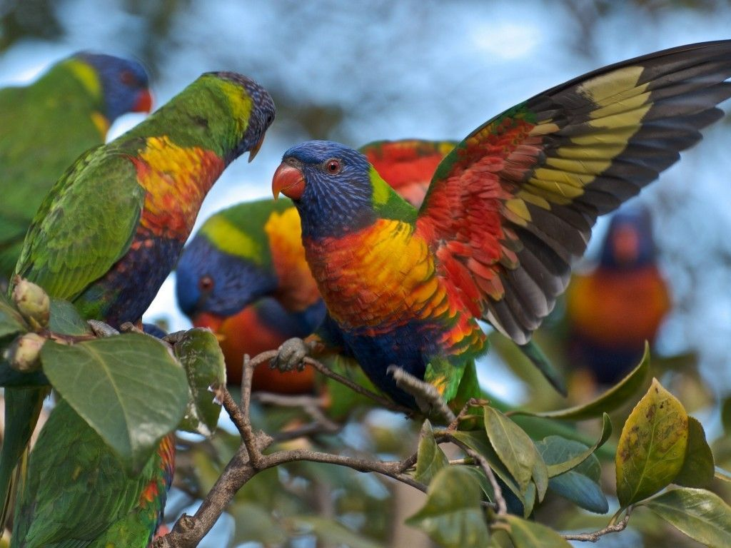 beautiful birds wallpaper - google search | bird lover | pinterest