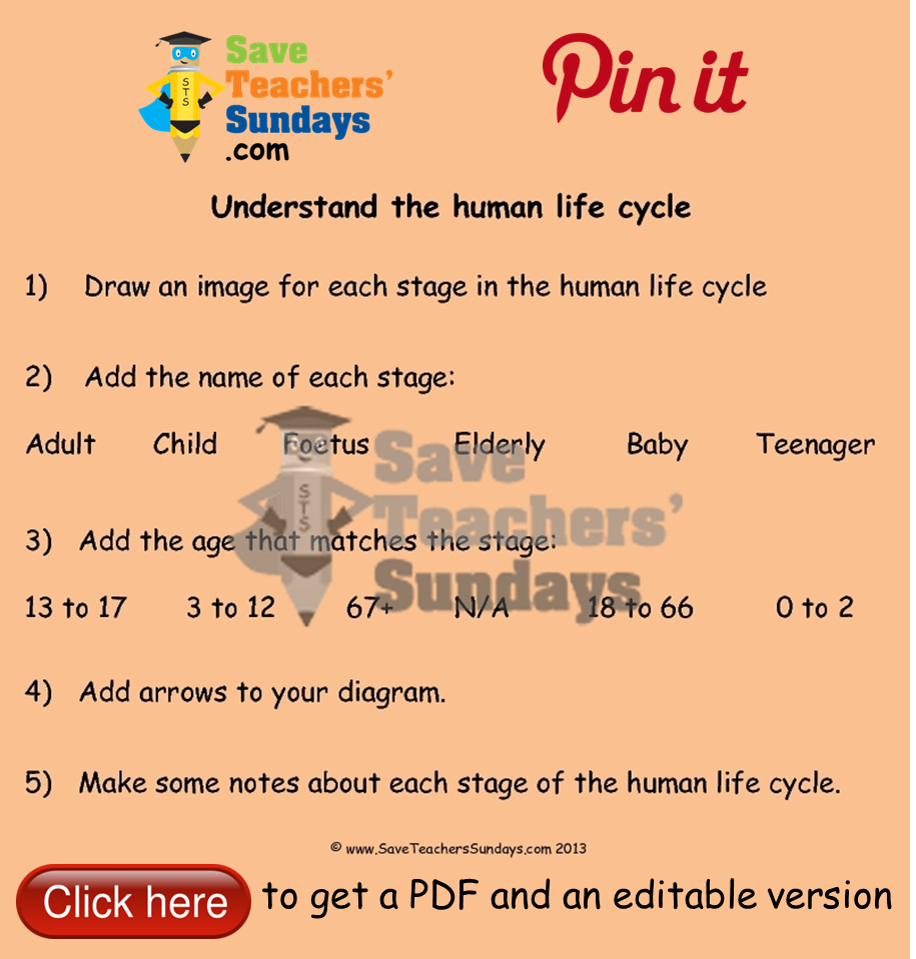 Human life cycle instructions and worksheet go to httpwww human life cycle instructions and worksheet go to httpsaveteacherssundays pooptronica