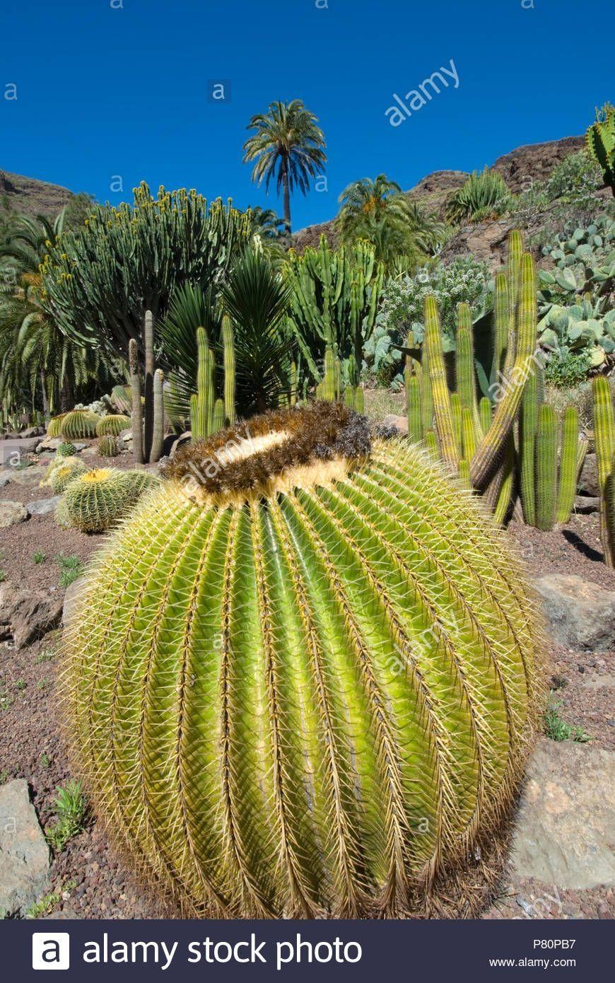 Green Cactus Garden City Park Garden city park, Cactus