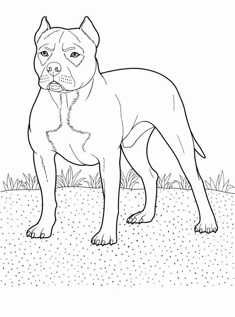 Pitbull Coloring Pages Animal Coloring Pages Dog Coloring Page