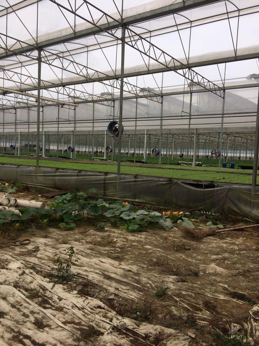 Organic Hydroponic greenhouse