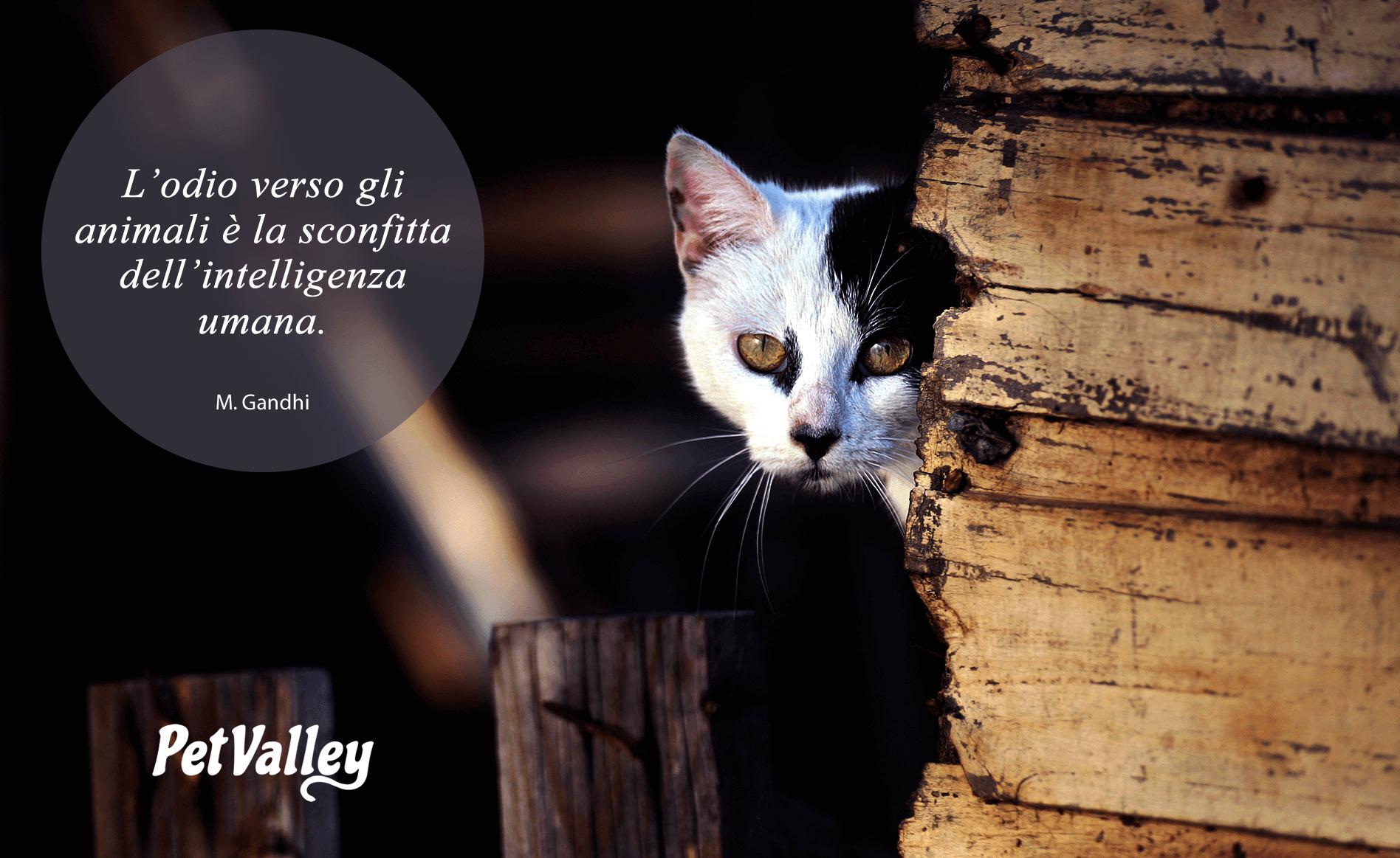 L'odio verso gli animali è la sconfitta dell'intelligenza umana. (M.  Gandhi) | Animali, Citazioni sui gatti, Fotografia di gatti