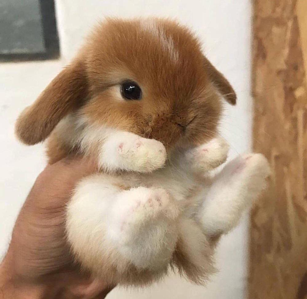 Smol Bun Bun Aww Cute Baby Bunnies Cute Little Animals Baby