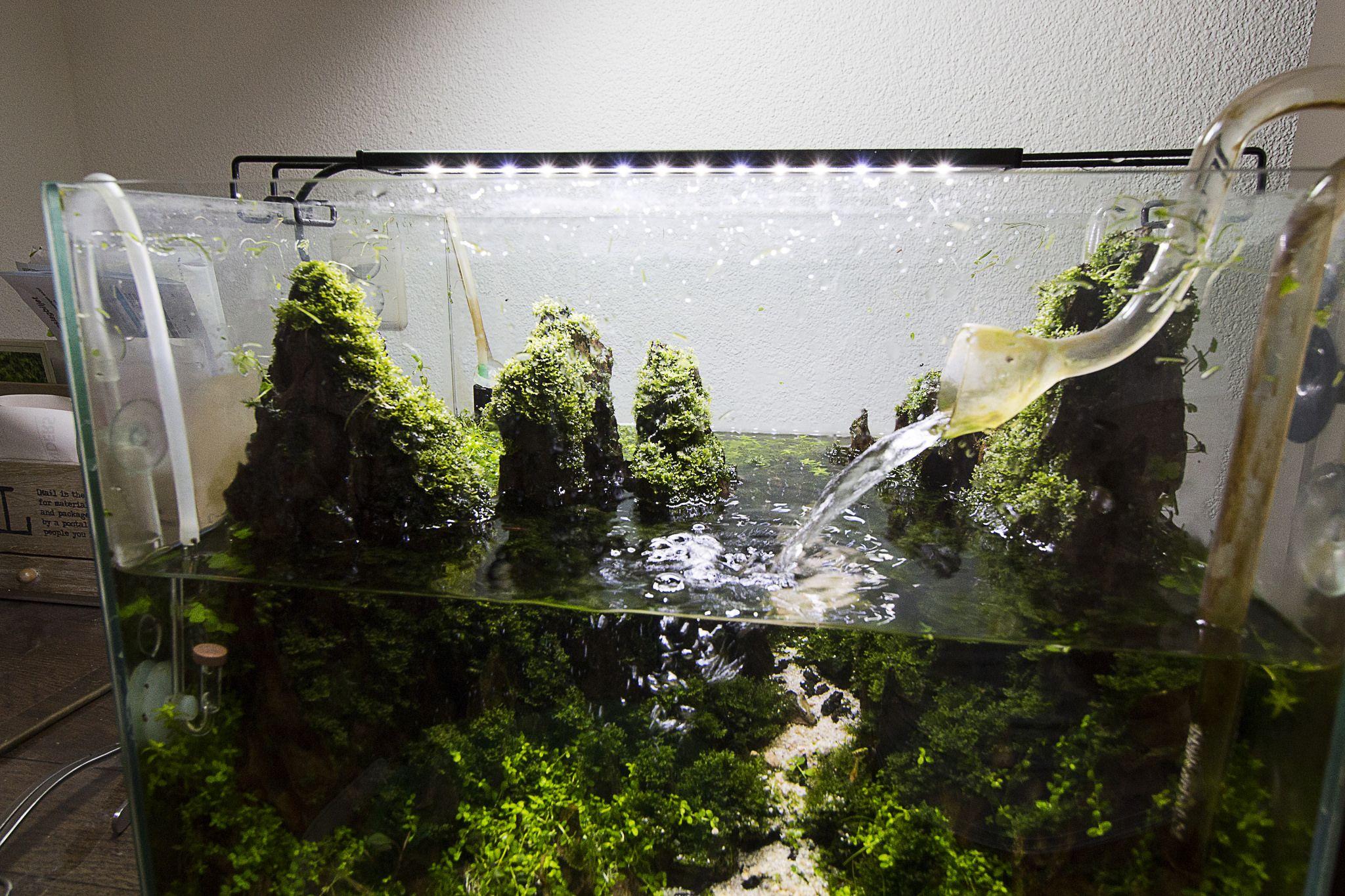 Mountain aquascape aquarium. Maintenance day. Plants ...
