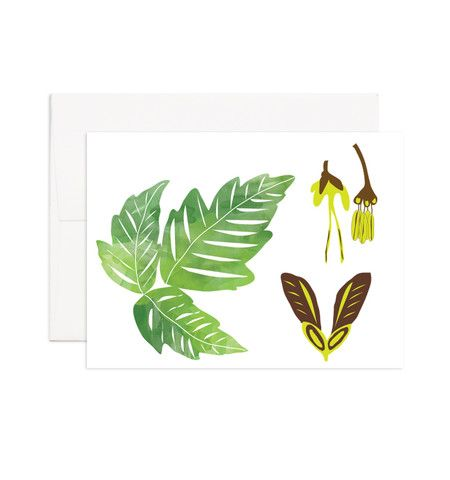 Box Elder Maple  Printed on 100% recycled paper. Blank inside, perfect for any occasion.