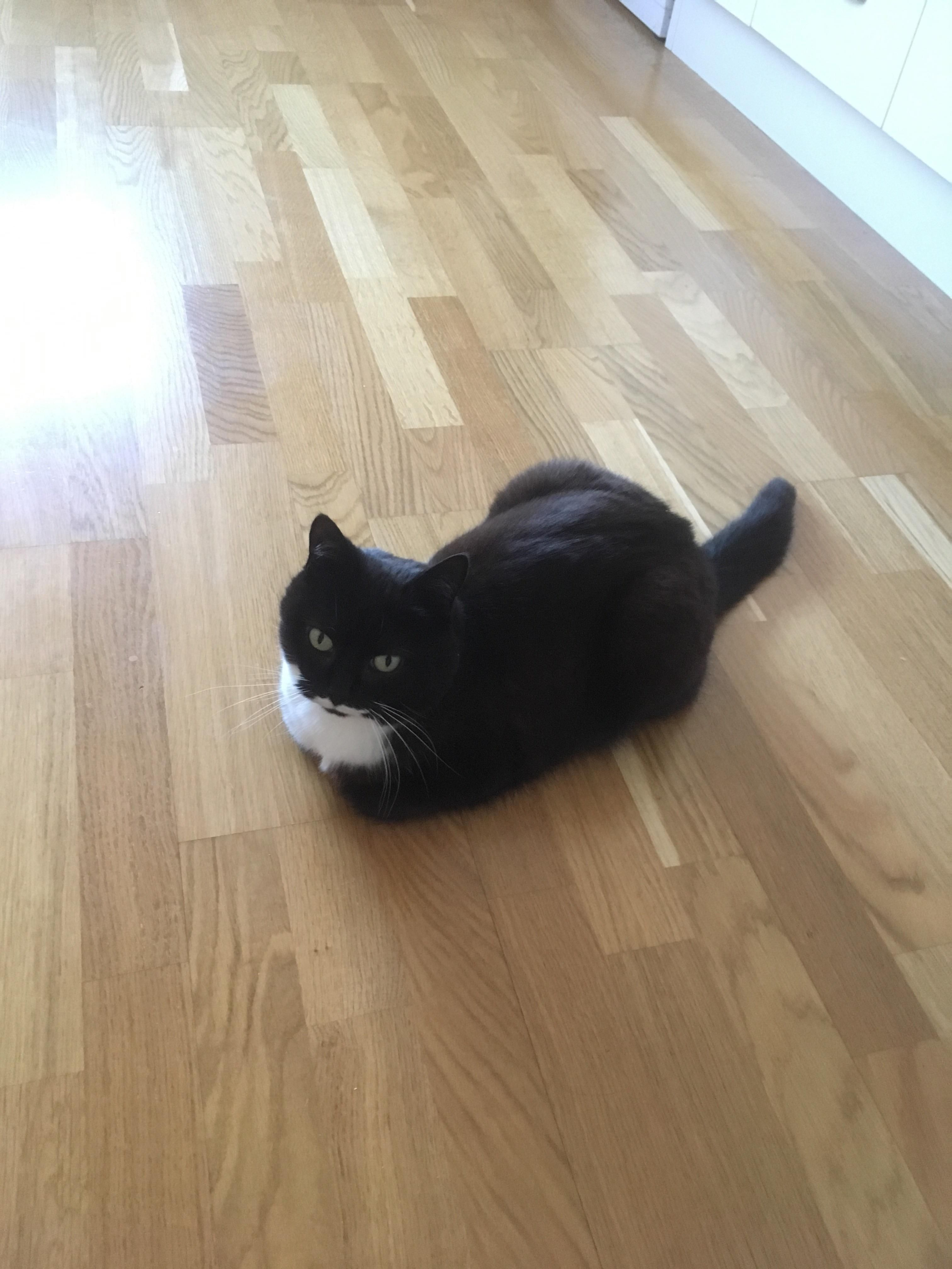 My Cat Loafing On The Floor Cats