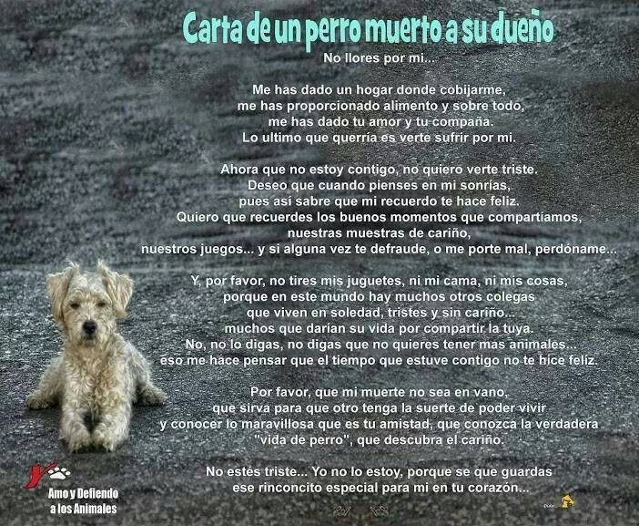 Carta De Un Perro Muerto A Su Dueño Lm Dog Lver Pinterest