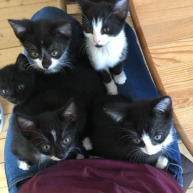 Die beliebtesten Videos von Tag: kitty core
