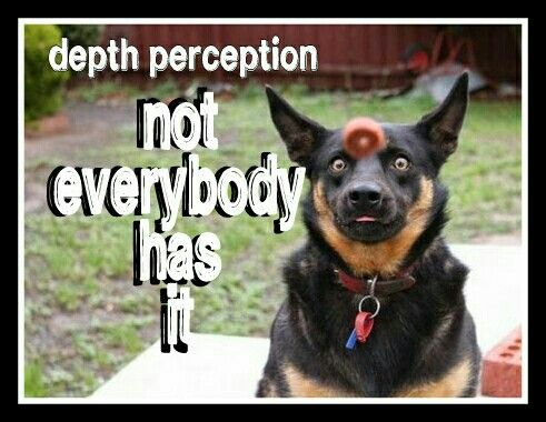 Meme Depth Perception Pink Peyote Memes Funny Animals - Photographer proves dogs can fly with funny perfectly timed photos