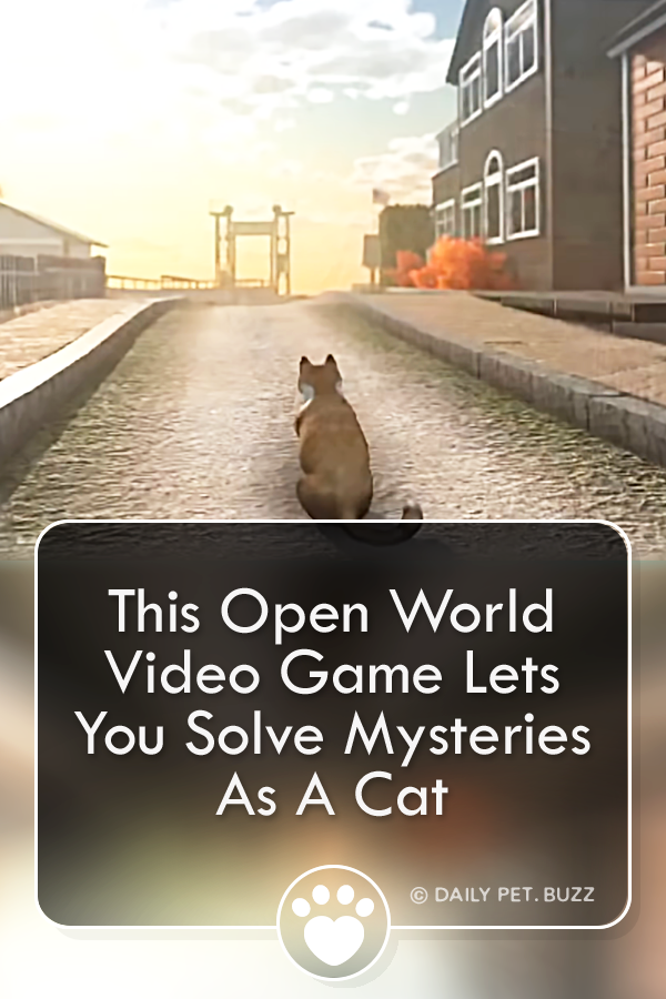 Peace Island Is A Puzzle Laden Mystery Game Where You Play As A Cat Explore The Island Solve Quests And Uncover The Reaso Mystery Games Mystery Video Game