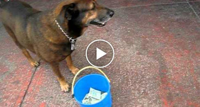 Inteligente Cão Sabe Exatamente o Que Fazer Para Pedir Dinheiro Aos Turistas http://www.funco.biz/inteligente-cao-sabe-exatamente-pedir-dinheiro-aos-turistas/