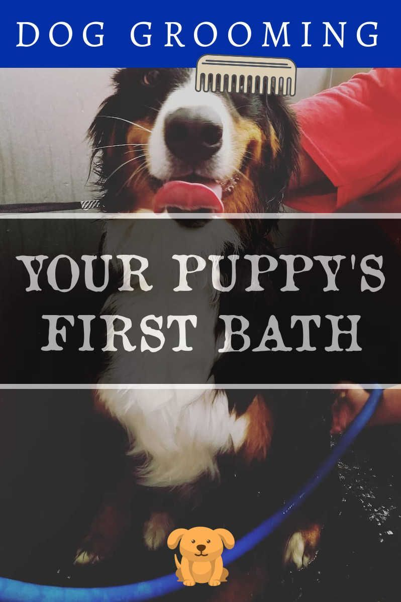 At Home Grooming Tips That Will Save You Money You Can Get Additional Details At The Image Link Dogwash Dog With Images Dog Grooming Dog Wash Dog Groomers