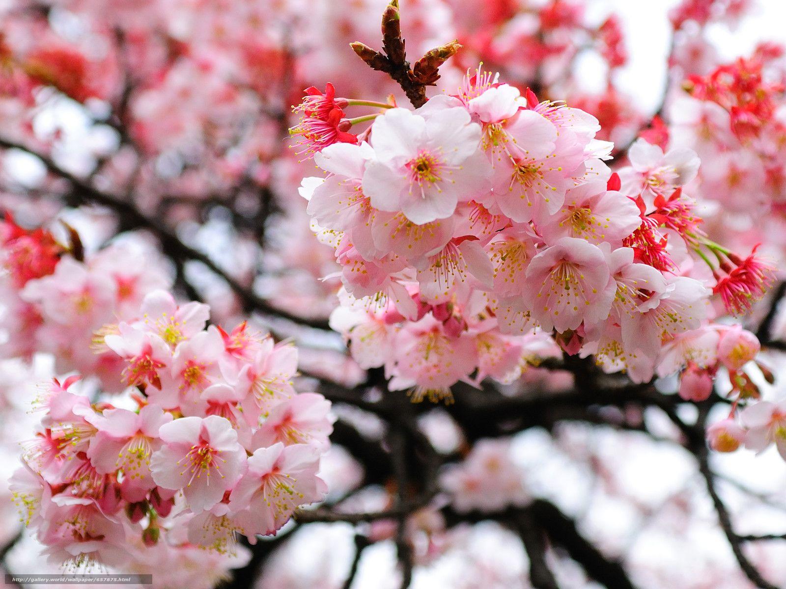 Download Wallpaper Flowers Flowering Color Branch Free Desktop Wallpaper In The Resolution 3029x2272 Pictur Flowers Free Desktop Wallpaper Spring Fruit