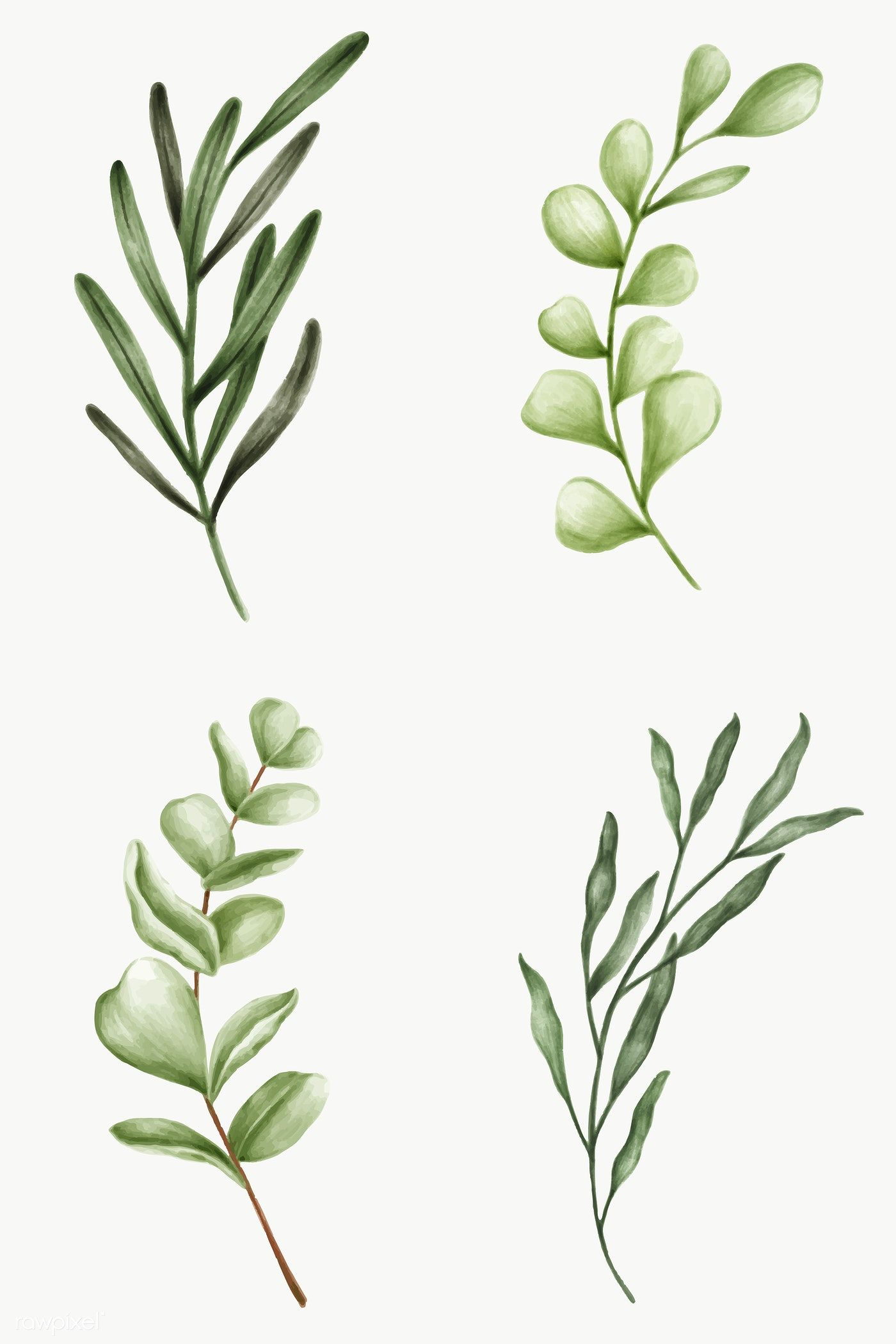 Download Premium Png Of Green Leaves Collection Transparent Png