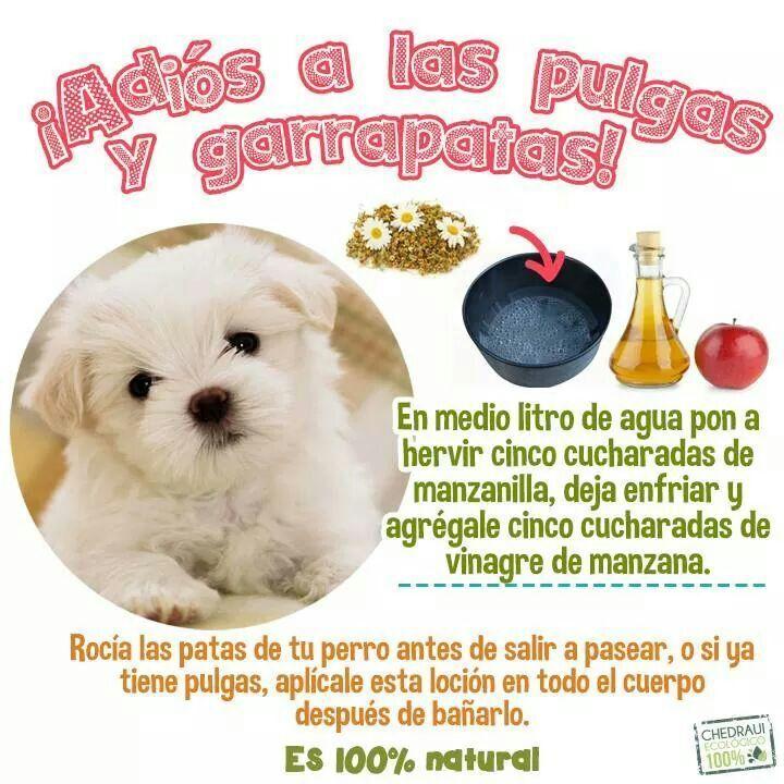 Photo of Receta casera para prevenir pulgas y garrapatas. #Animales #perros #cats #antip …