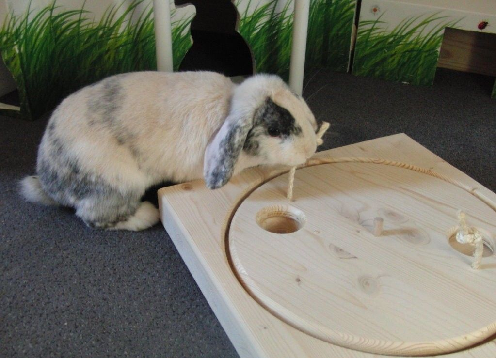 Pin Auf Animal Enrichment