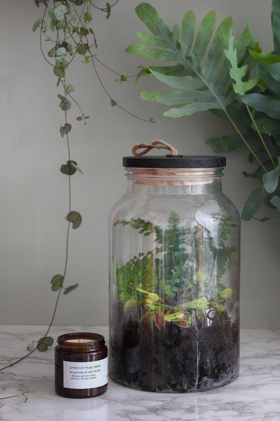 diy terrarium ferm pas pas pour r aliser un jardin. Black Bedroom Furniture Sets. Home Design Ideas