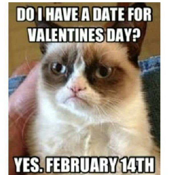 Funny grumpy cat memes about dating
