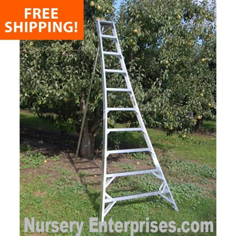 30 White Flowers To Plant In Your Garden Yard Landscape In 2020 Planting Flowers Garden Ladder Yard Landscaping