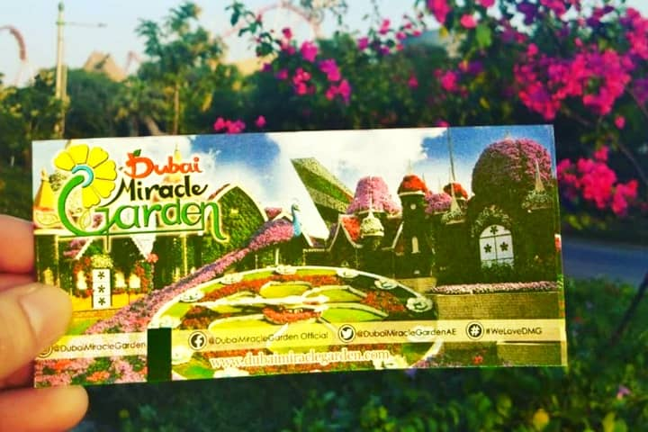 Historical Ticket Prices of Dubai Miracle Garden Miracle