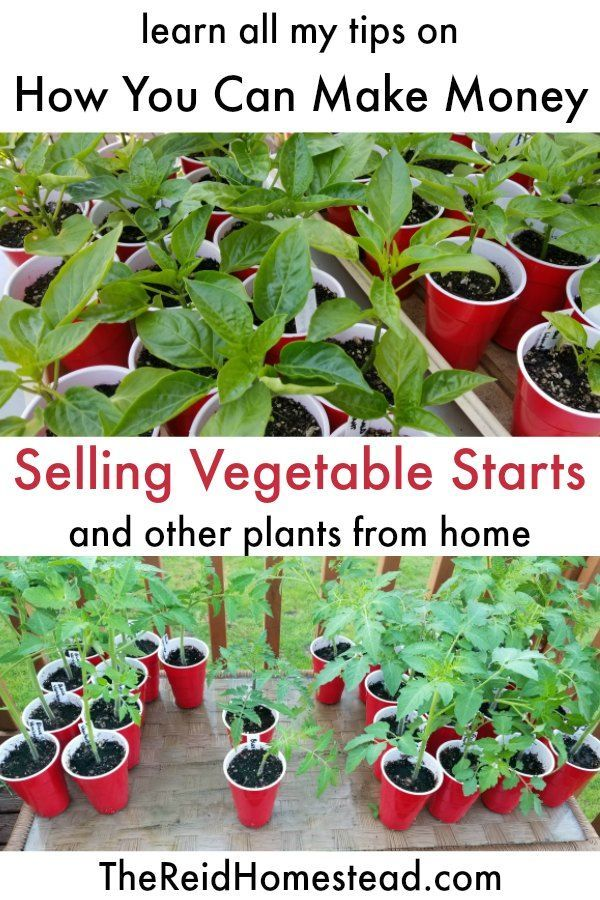 How to Make Money Growing Plants at Home (an easy side hustle #howtogrowplants