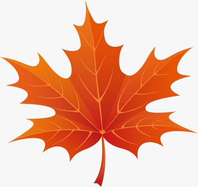 Cartoon Red Maple Leaves Png And Clipart Leaf Art Maple Leaf Tattoos Autumn Leaves
