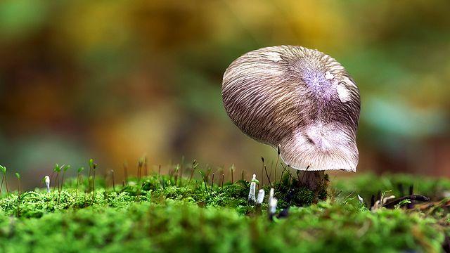 Mushroom Cap by Maianer, via Flickr