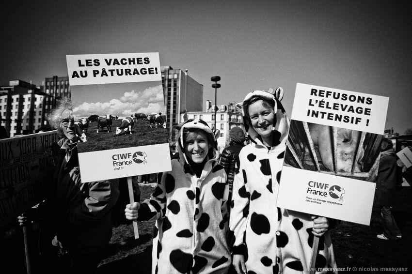 «Vacheries au galop» La PHOTO du Jour du 3 mars 2013