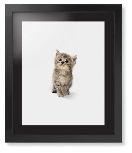 Kitten Framed Print, Black, Contemporary, Black, Black, Single piece, 16 x 20 inches