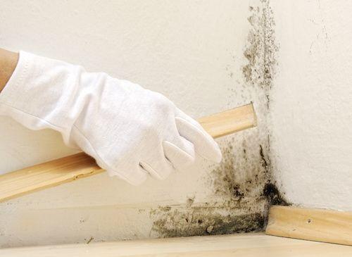 Comment enlever de la moisissure sur un mur ? Dangereuse pour la