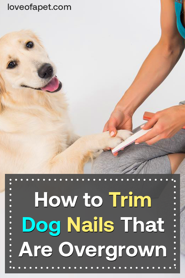 How To Trim Dog Nails That Are Overgrown Love Of A Pet In 2020 Trimming Dog Nails Dog Nails Dog Cleaning