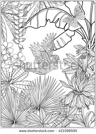 Tropical Wild Birds And Plants Garden Collection Coloring Page Book For Adult Older Children Outline Vector