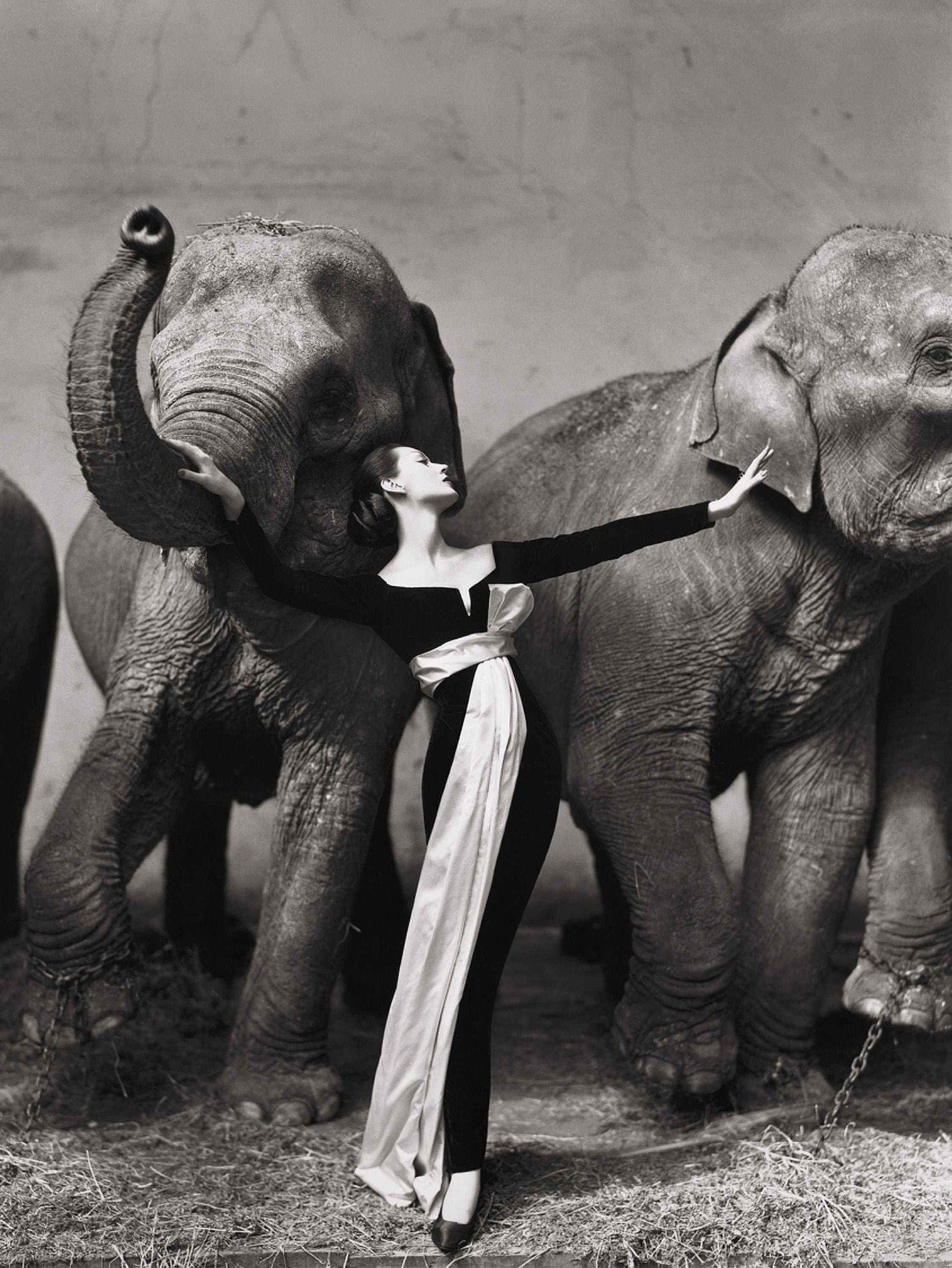 Dovima and the elephants by Richard Avedon for Harpers Bazaar, 1955