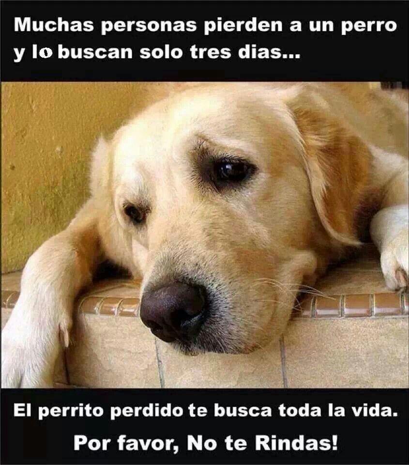 …el perrito perdido te busca toda su vida