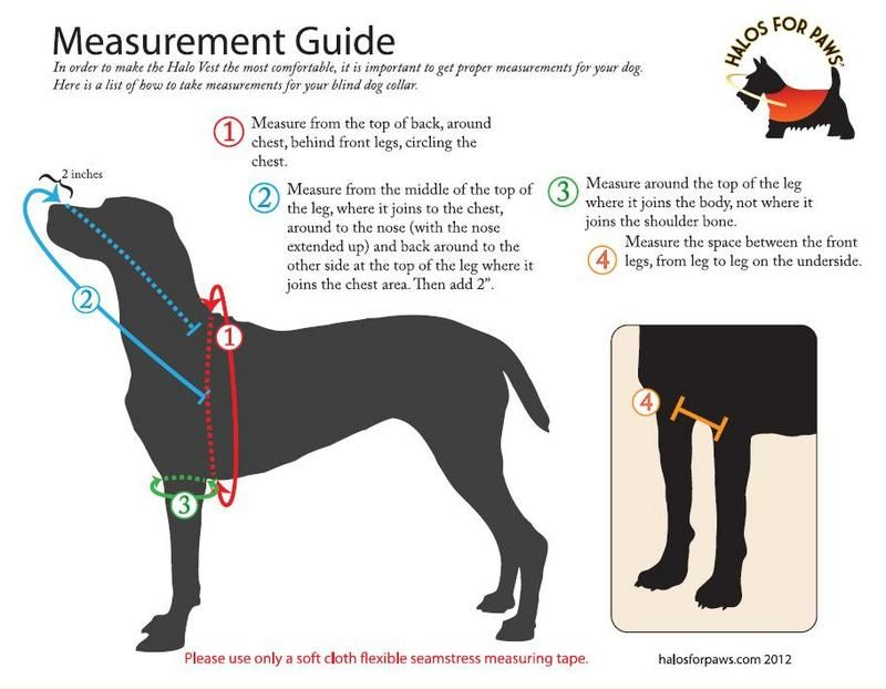 About The Blind Dog Halo Vest