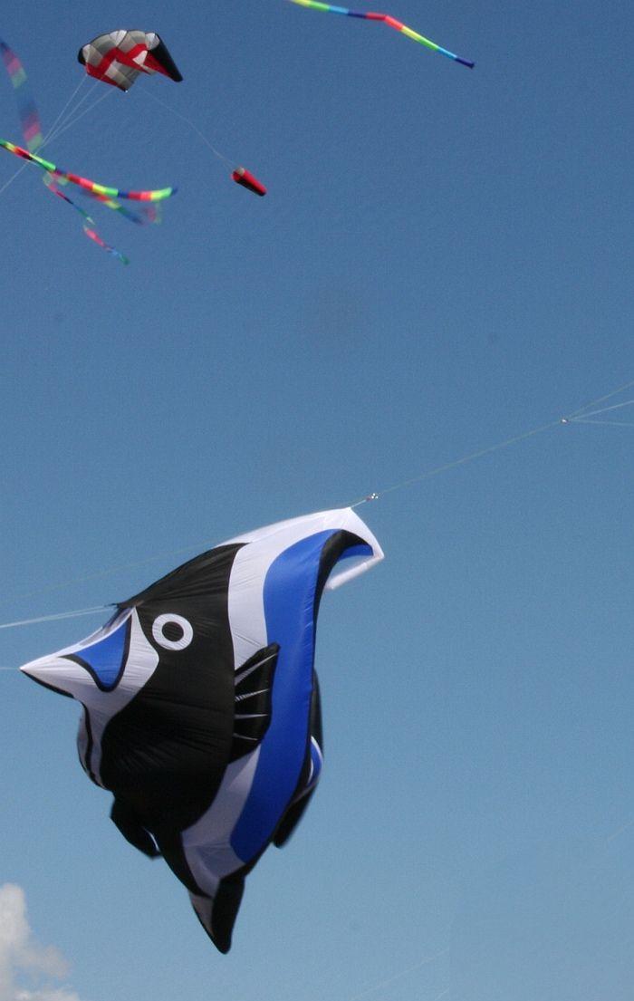 Angel Fish Angel Fish Kite Fish
