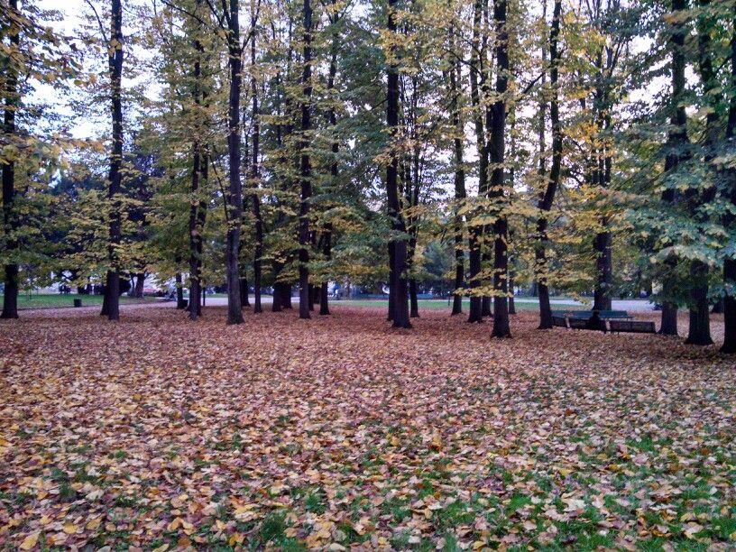 Autumn time Tileas in Milan