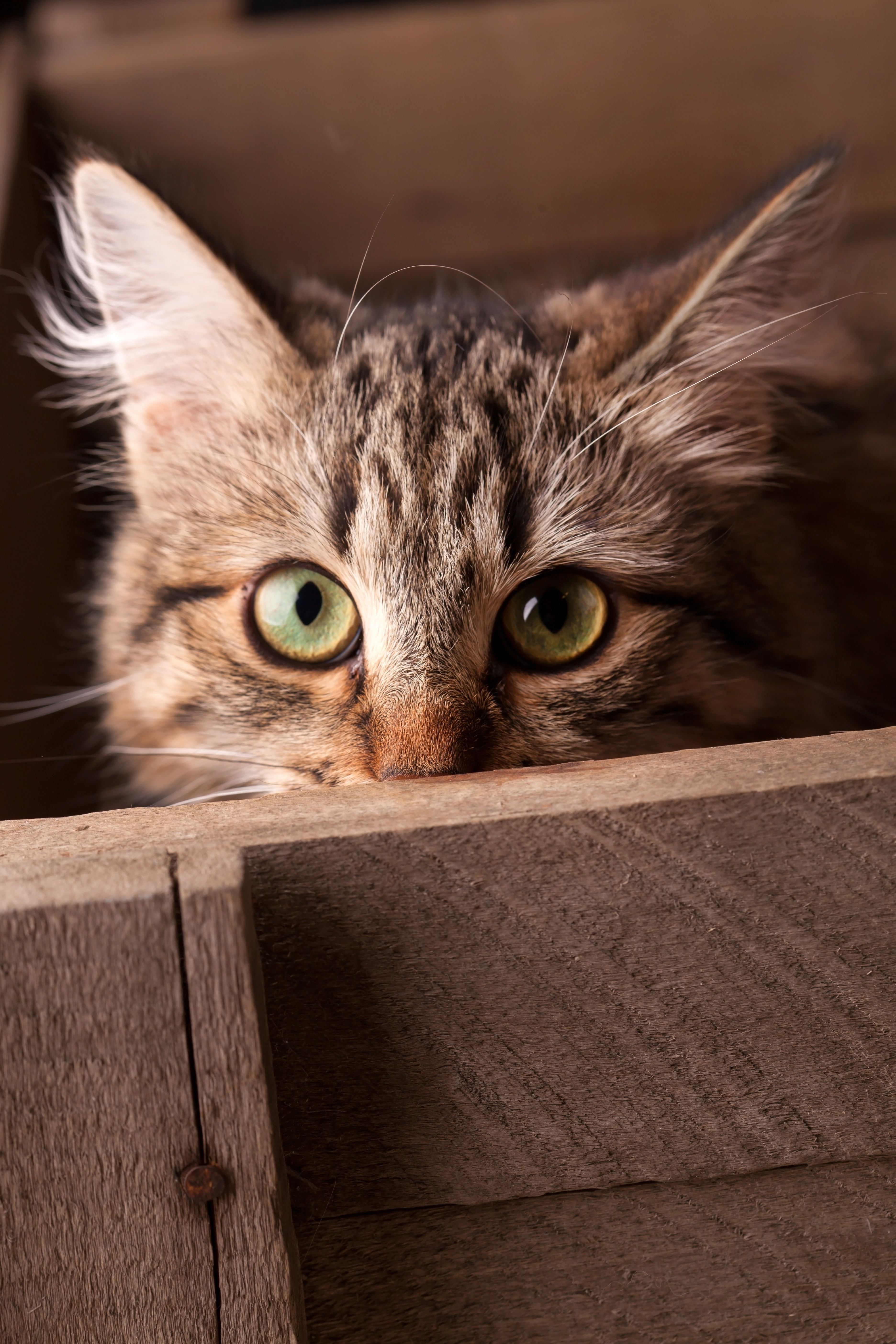 Why do cats get FIP? Know the signs & symptoms. Cat purr