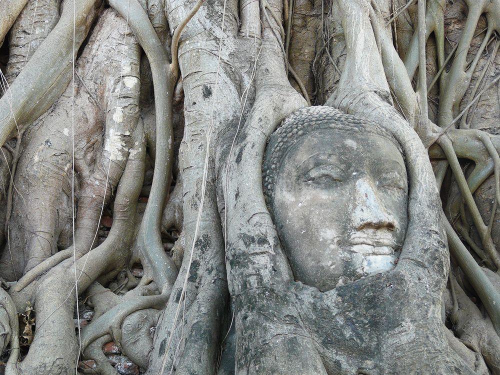 Sommige Boeddhabeelden houden er een tweede leven op na. Zoals de Boeddha bij Wat Phra Mahathat die zich heeft laten omarmen door de wortels van een boom die duidelijk niet van plan is hem ooit nog los te laten. #buddha in Ayutthaya, Thailand