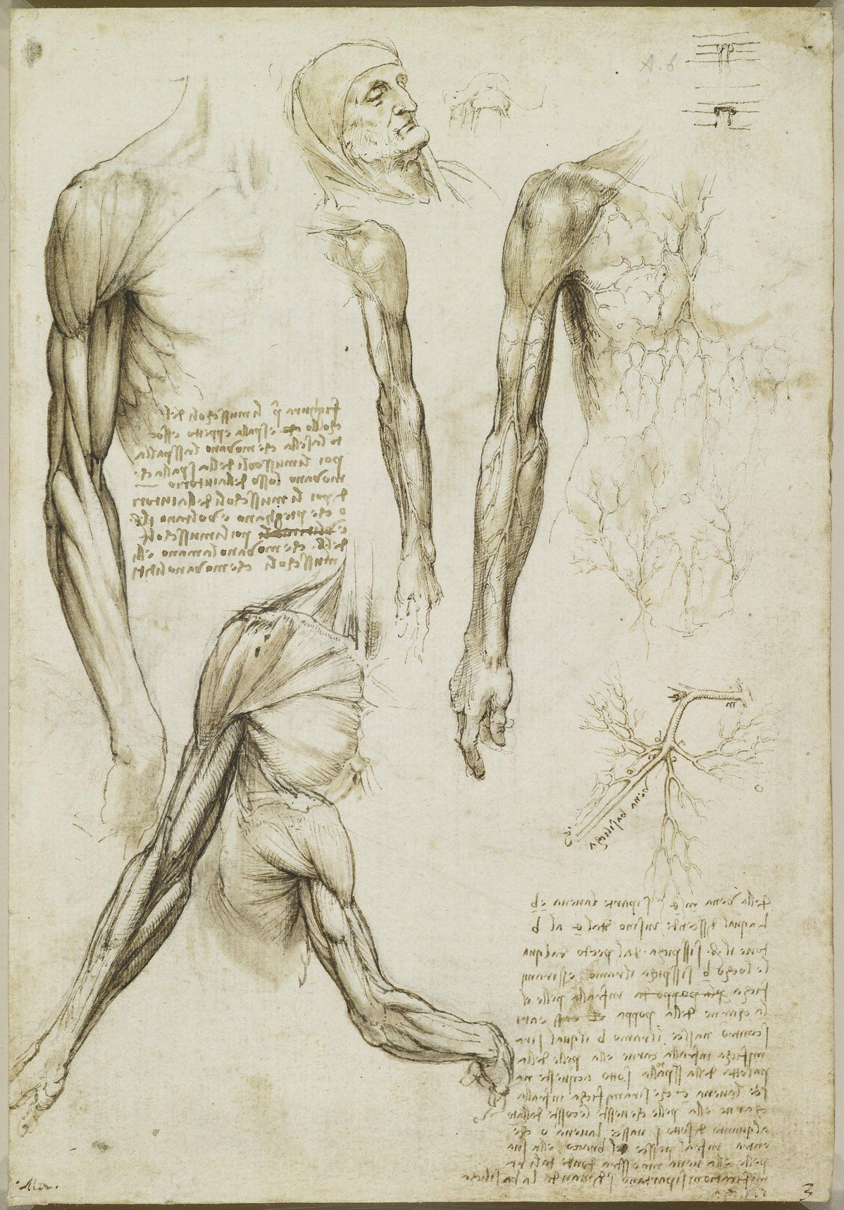 Recto: studies of musculature in the right arm; the head of an old ...