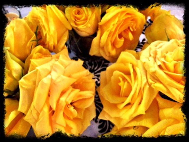 Yellow Roses Rose Yellow Roses Rose Meaning