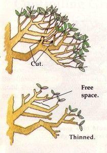 Ramification Bonsai Recherche Google Bonsai Tree Bonsai Tree Care Juniper Bonsai