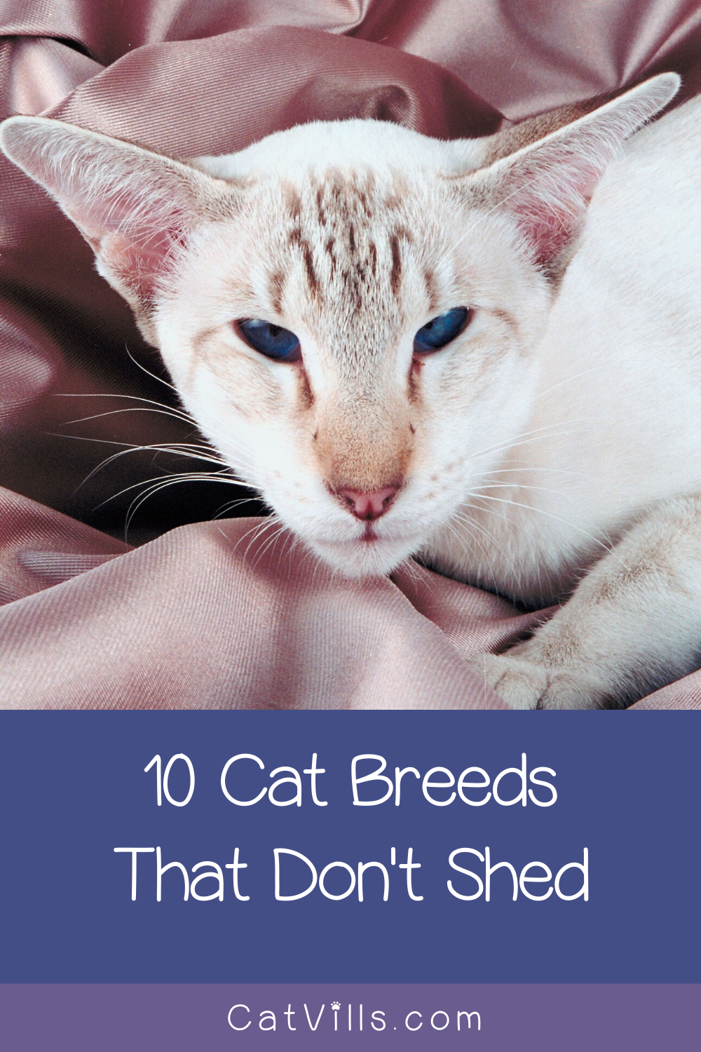 10 Cat Breeds That Don't Shed...Much CatVills in 2020