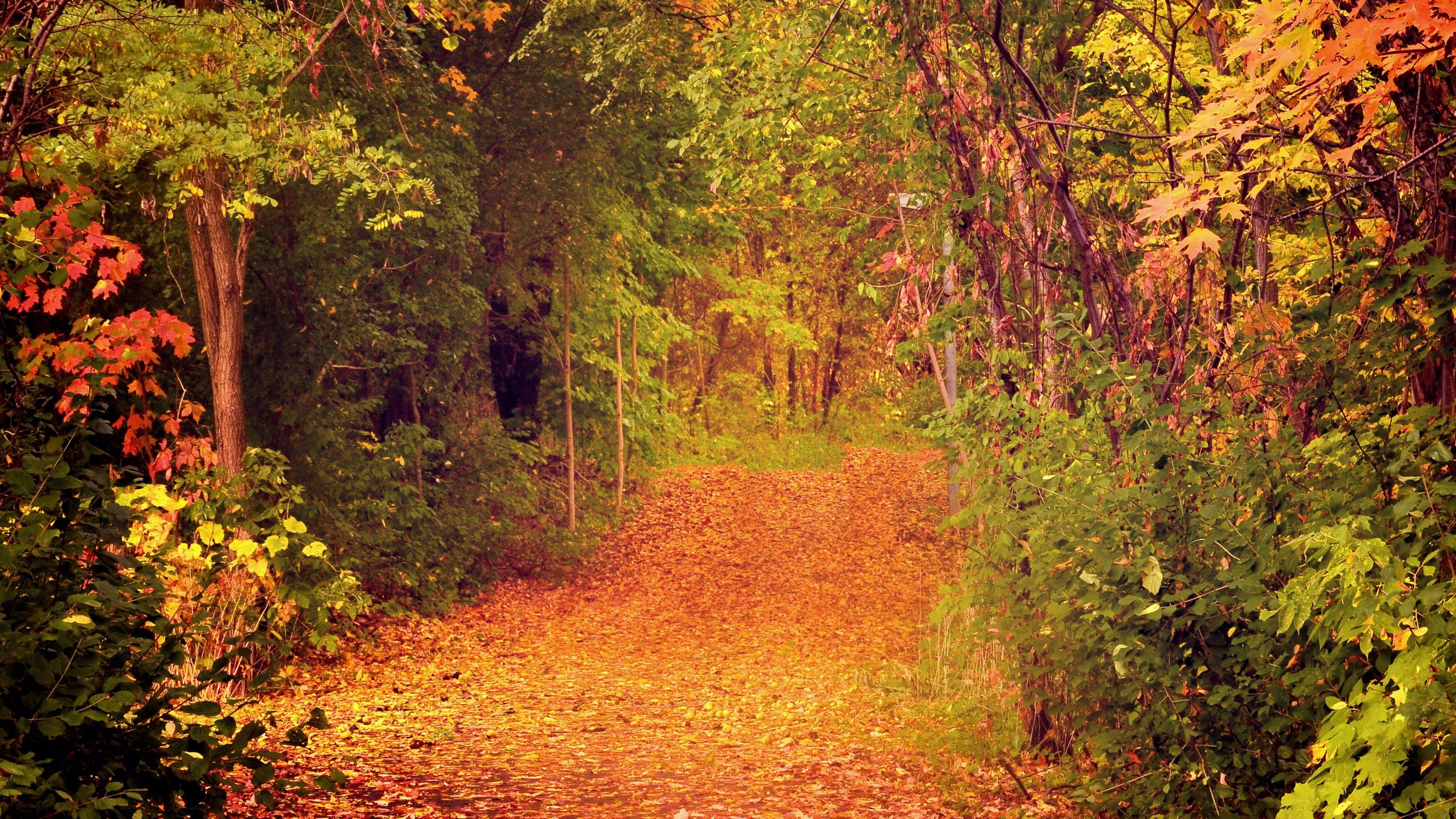 Pocketfullofgrace Com Pocketfullofgrace Resources And Information Autumn Wallpaper Hd Tree Wallpaper Autumn Forest