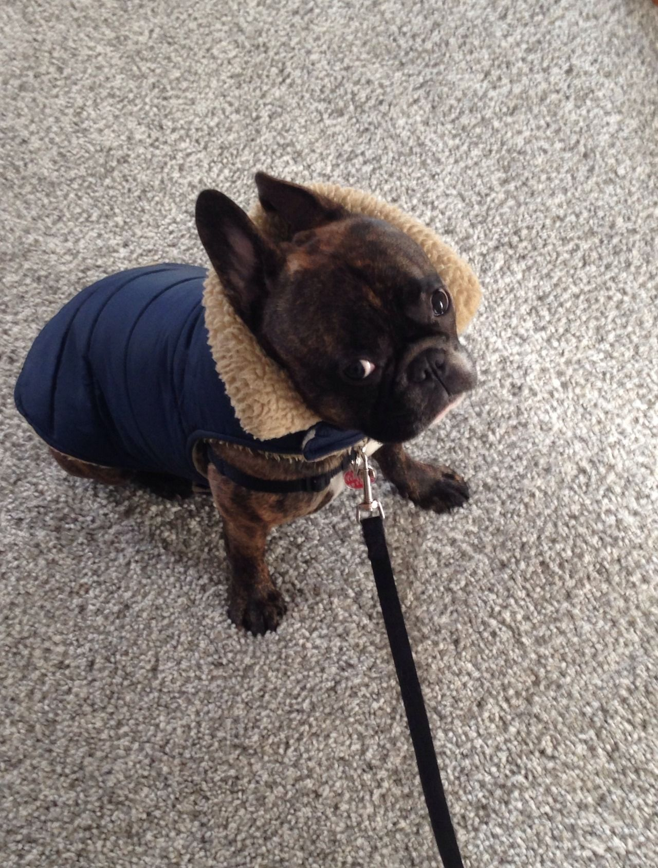 """""""So are we going for a walk or what?"""" Cleveland Pet"""