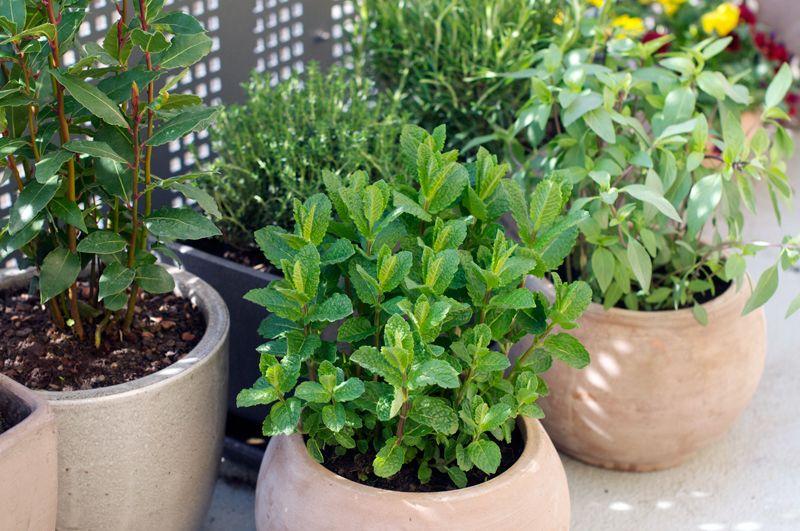 12 best ideas about Balcony Potting Herb Garden on Pinterest
